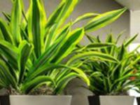 Рослини для школи: 10 найкращих варіантів з фото та описом